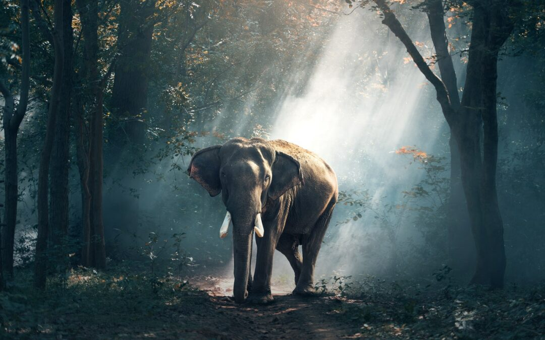 The Elephant That Could